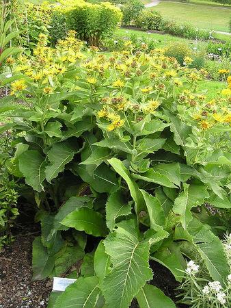 Лекарственные растения от кашля