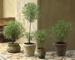 Десятка лучших комнатных растений