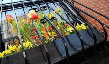 Озеленение французского балкона