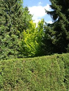 Ботанический сад университета Менделя в Брно