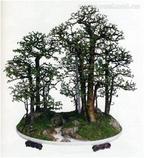 Миниатюрные леса
