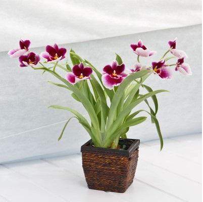 Фото подарок орхидеи
