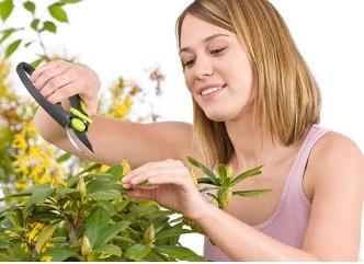 Как ухаживать за рододендроном