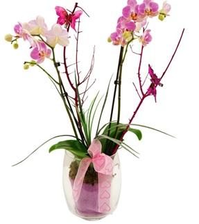 Подарок орхидея что значит