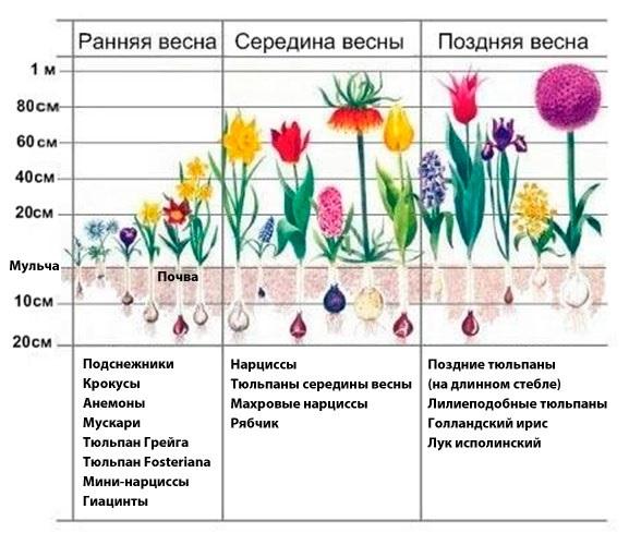 Можно ли сажать тюльпаны осенью в горшки 78