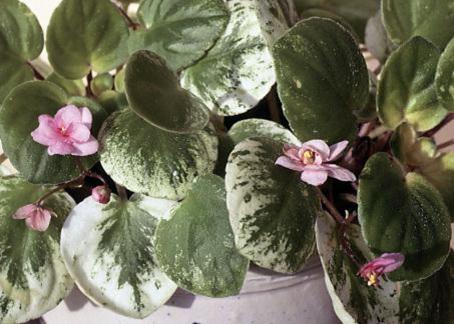лампы днат 600 вт для растений цена