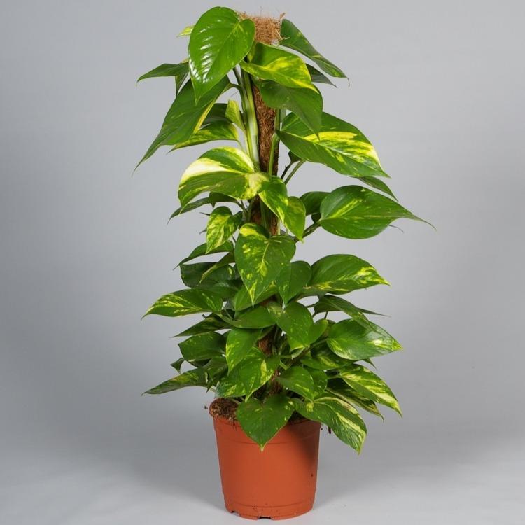 - Kleine zimmerpflanzen ...
