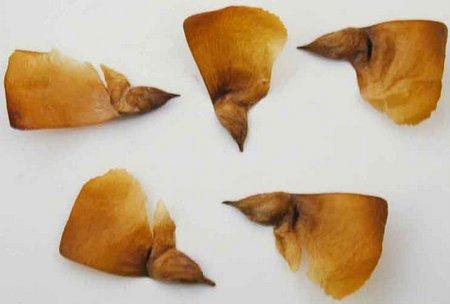 Семена кедра ливанского