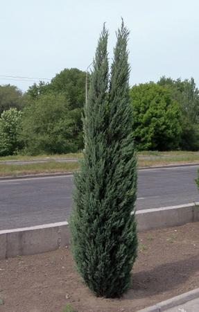 Растения, фОТО - каталог растений