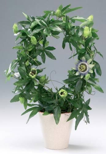 удобрения для комнатных растений с азотом