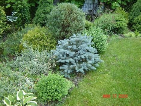 Сад на стандартном участке сад на