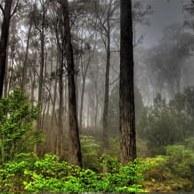 Лес – легкие Земли