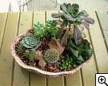 Бильбергия  Комнатные растения