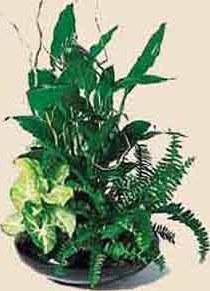 Почве для композиции из растений в