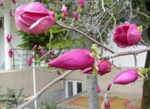 Новости › события › тюльпанное