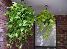 Самые выносливые комнатные растения