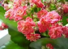 Растения › интересное о растениях
