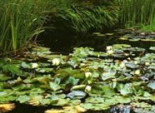 Сонцелюбивые растения на ваш сад