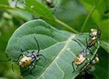 форумы паразиты в организме правда или бред