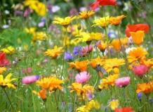 В сказочном мире полевых цветов