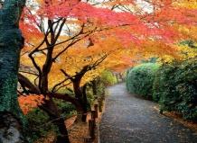 › планируем яркий осенний сад