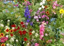 «Растения-выручалочки» в Вашем Саду