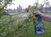Средства борьбы с вредителями на цветах