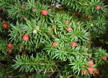 Красивый сад из хвойных деревьев: 55 ландшафтных идей для частной