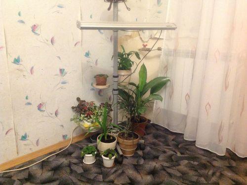 Цветочный уголок в квартире фото