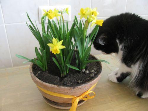 коты и цветы - Страница 2 U_250180412