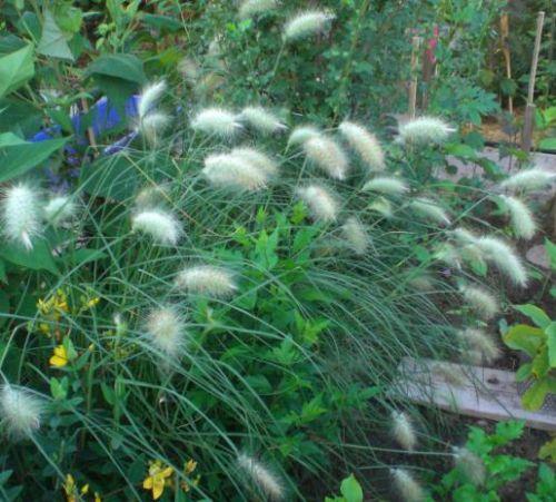 Цветок и растения с толстым стеблем и стволом кактусы