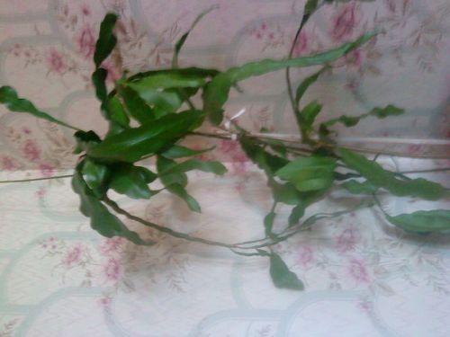 Бабушка дала мне 2 растения а названия