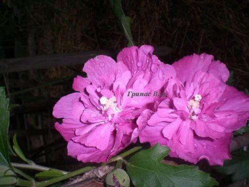 название цветов с знаком
