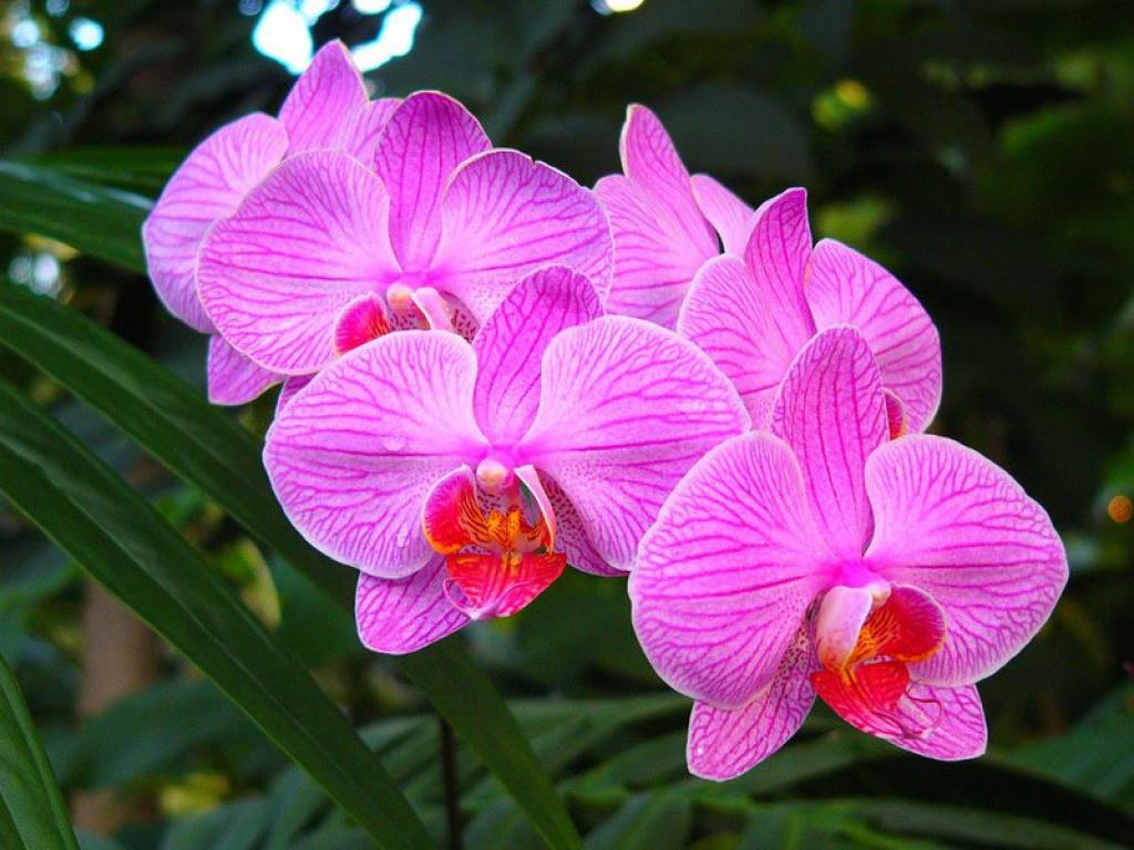 """Орхидея из бисера - схема плетения  """" Бисер.ру. коды для самсунга s5230. орхидея из бисера - Самое интересное в блогах..."""