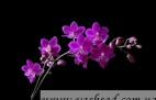 Коллекция орхидей