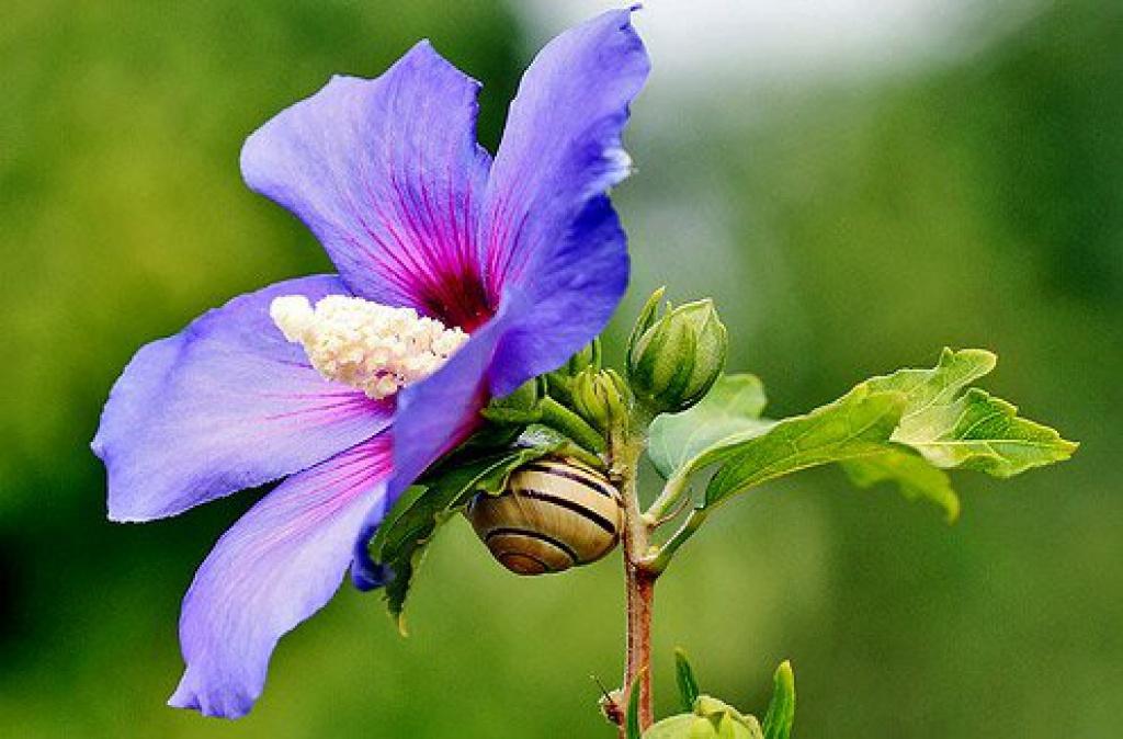 Все домашних цветов всего мира