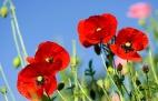 Цветы полевые - макросъемка