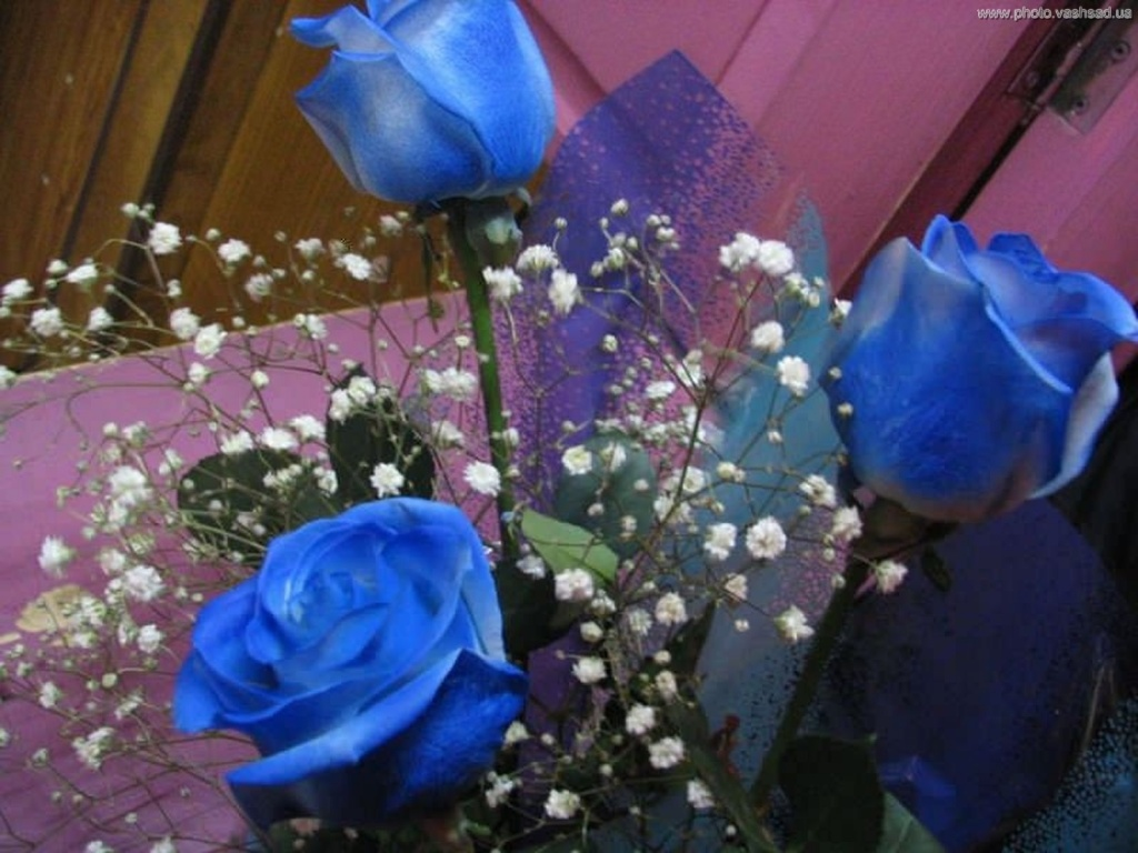 Роза плетистая ред каскад 5