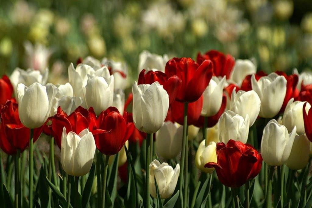 На рабочий стол новое фото цветы 4554