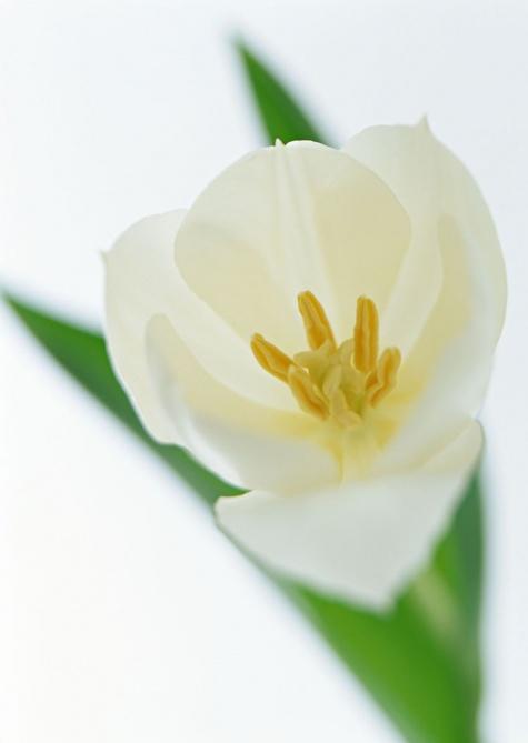 Название цветка по фото 7