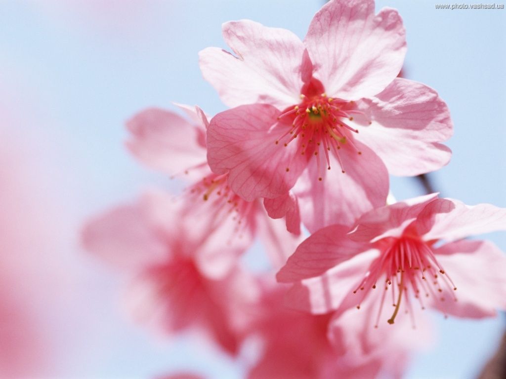 Картинки цветов красивые - e