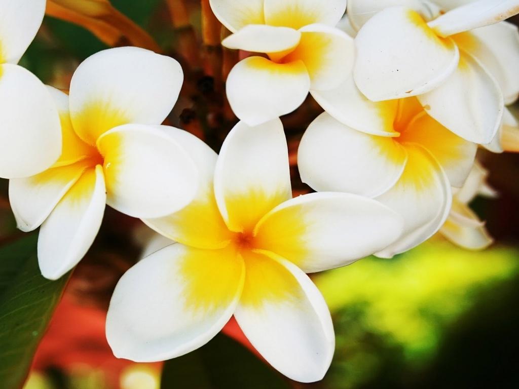 Где пробились цветы цветы п великжанин