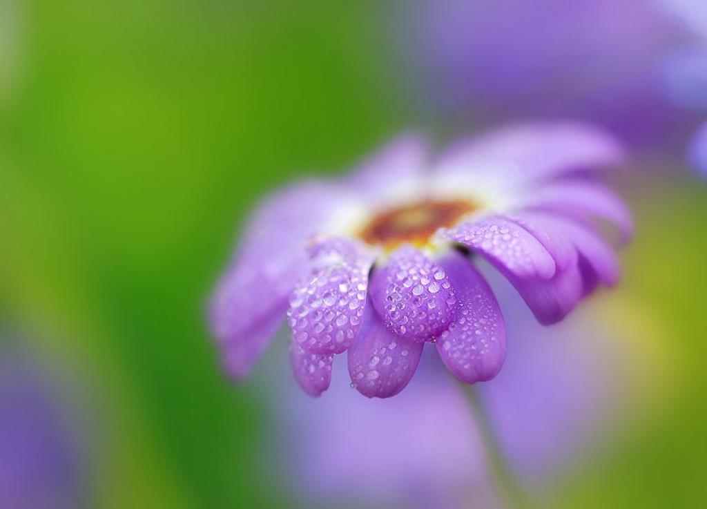 Цветы для татьяны картинки 1