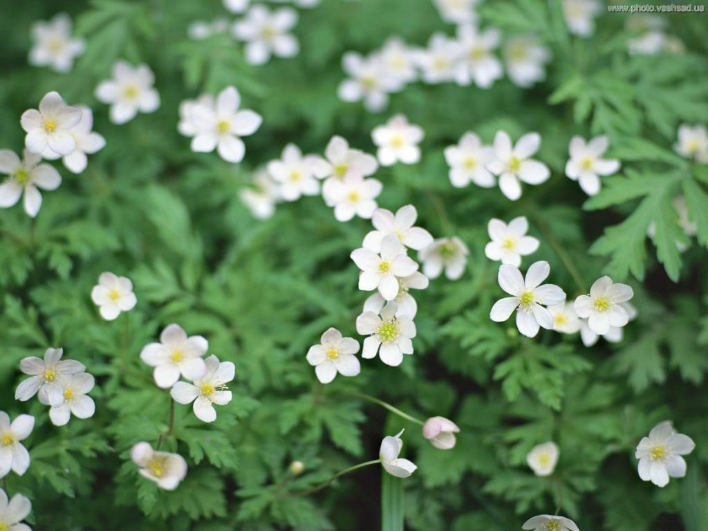 Мелкие цветы картинки 1