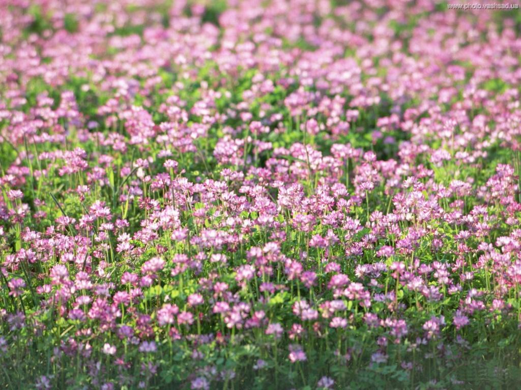Полевые цветы отдушка 10 мл.  Германия - Аромамила.