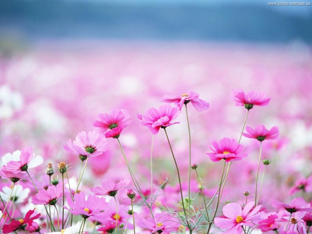 Цветы ванильные картинки 8