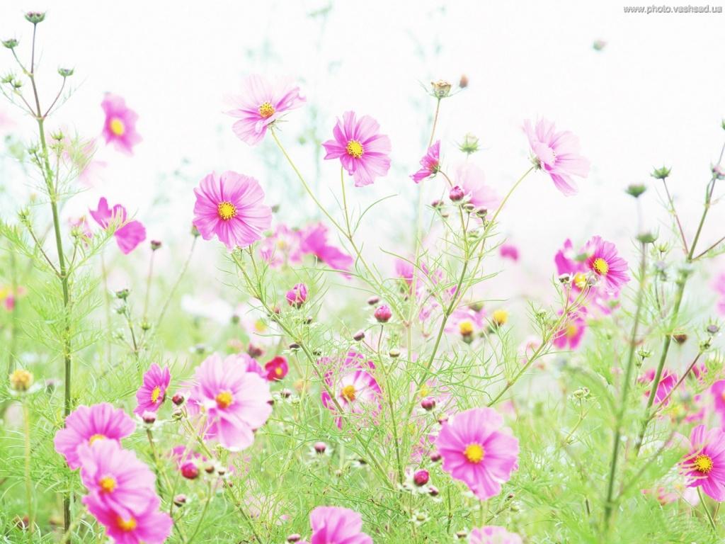 Милые картинки цветы 6