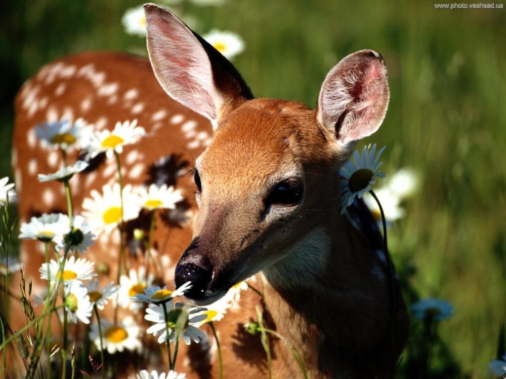 Картинки про природу цветы животные 2