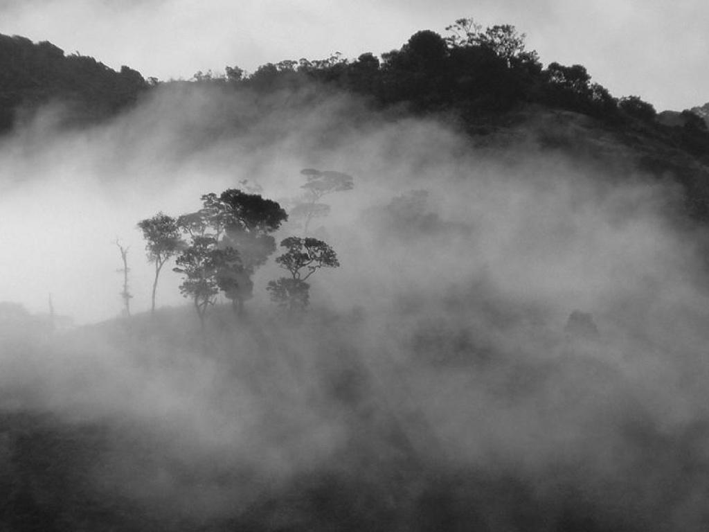 Туман в природе картинки