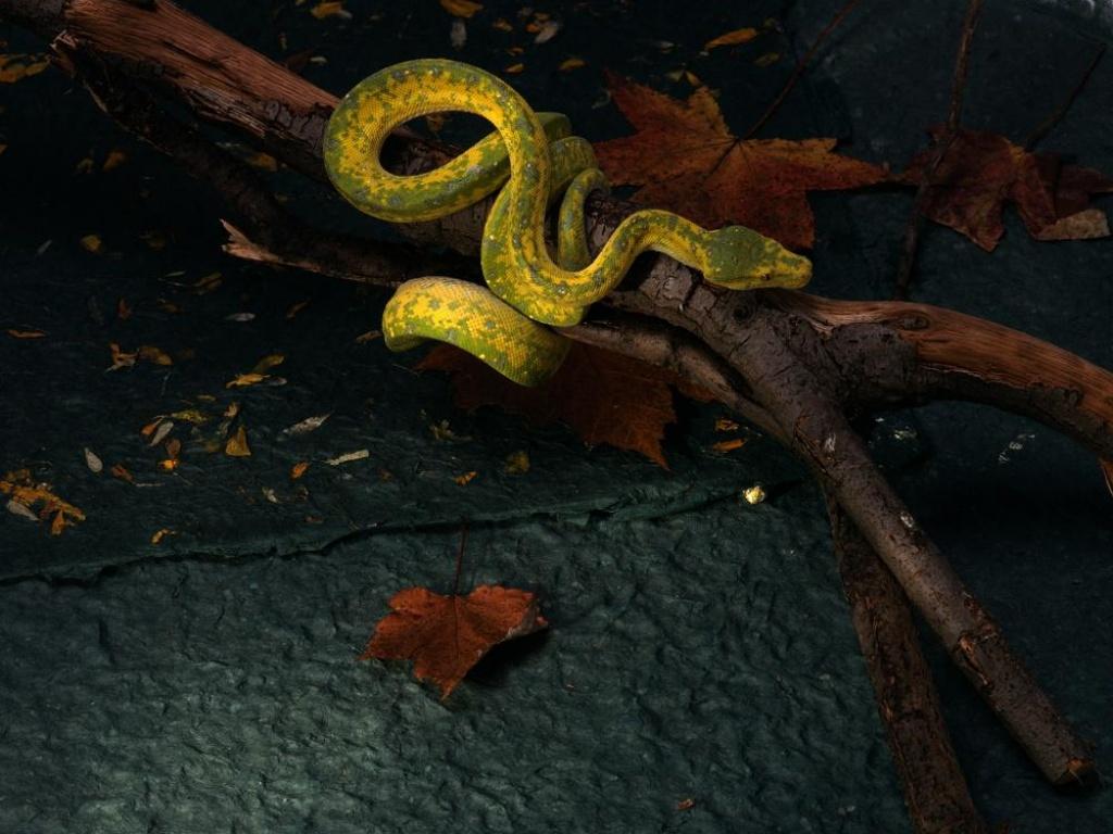 Рожденному в год змеи (1965.1977.1989.2001). Мудрой ЗМЕЕ нынче будет